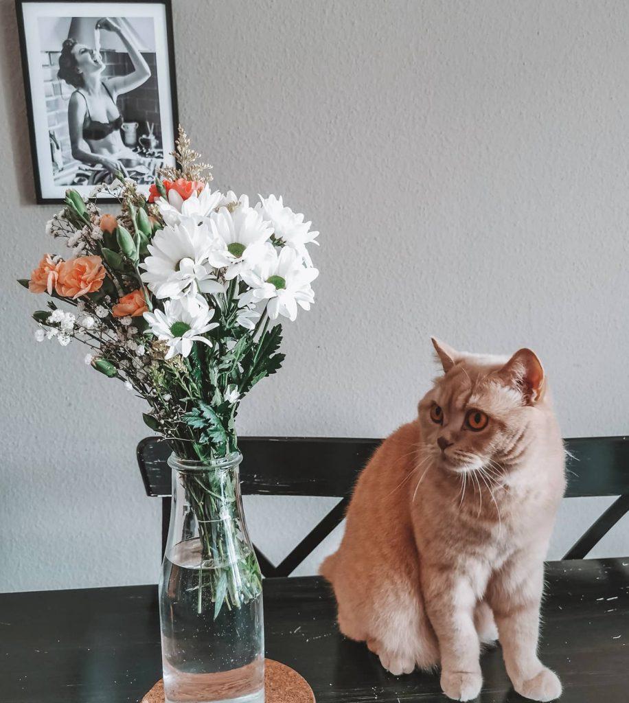 Katzenallergie, Heuschnupfen und Pollenallergie